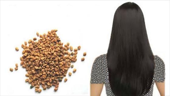 گیاه شنبلیله برای مو چه فوایدی دارد
