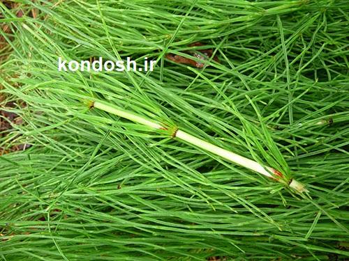 تاثیر استفاده از گیاه دم اسب و روغن شتر مرغ روی ناخن