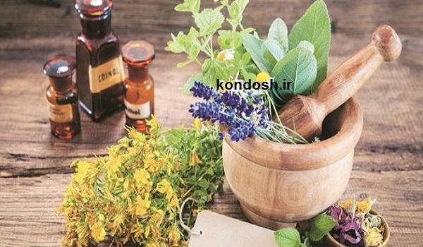 لیست گیاهان مناسب برای ریزش مو